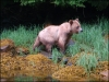 8-Khutzeymateen-Grizzly-Bear-Sanctuary