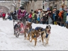Quebec-Carnival-dogsled-racing