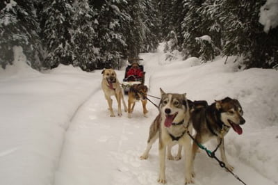 Dogsledding at Sun Peaks in British Columbia