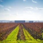 Niagara, vineyard, winery, tourism, ontario