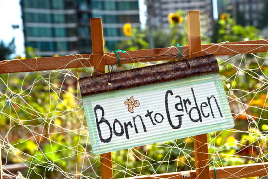 Community Garden, Davie Street, Vancouver