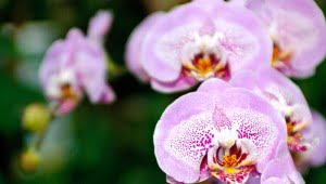 Orchids-from-Bloedel