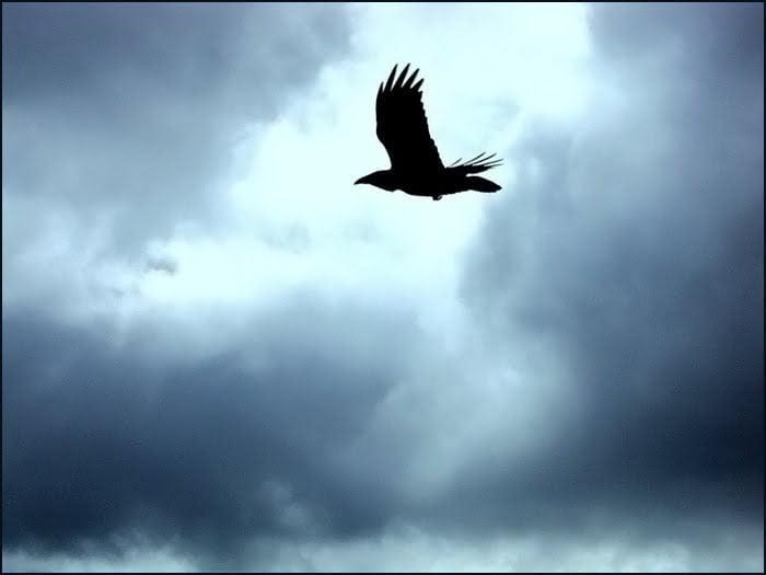 raven haida gwaii bc
