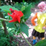 mothers-day-travel-stories-flower
