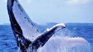 whales-tohora-canadian-museum-of-nature