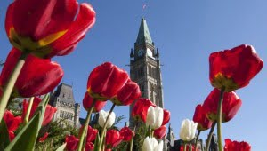 See the full colours of the season at the Ontario Tulip Festival in Ottawa. (CBC Image)