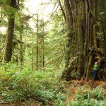 Ancient_Forest_Photo_by_TJ_Watt-avatar-grove-bc