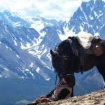 kananaskis-country-alberta-horseback-riding
