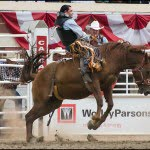 Calgary stampede rodeo