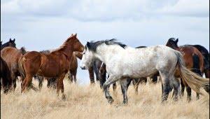 calgary stampede ranch, hanna, alberta, calgary