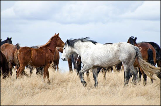 calgary stampede ranch, hanna, alberta, calgary