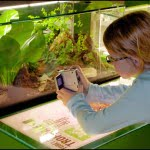 Montreal-Insectarium-with-kids