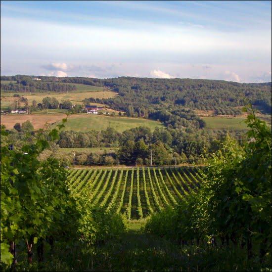 gaspereau-valley-vineyards-nova-scotia