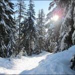 Seymour Mountain snowshoeing trails