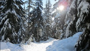 Seymour Mountain snowshoeing trails