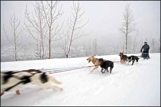 dogsled-adventures-revelstoke-british-columbia
