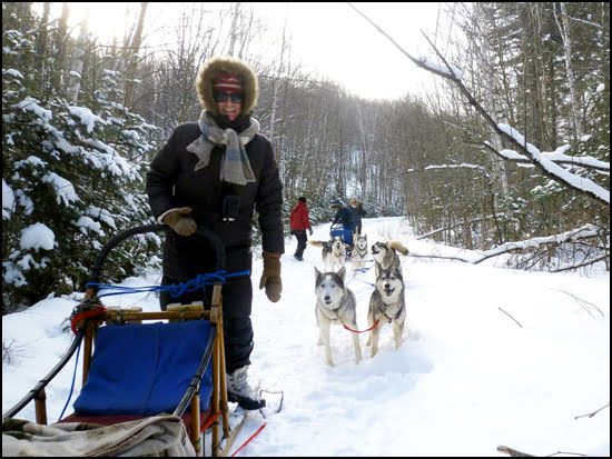 dog-sledding-winterdance-ontario