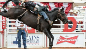Rodeo Calgary Stampede
