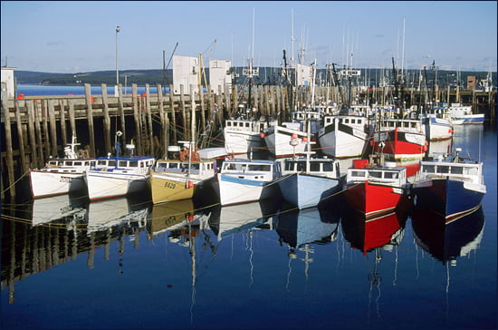 Go Shuck Yourself At Digby Scallop Days Vacay Ca