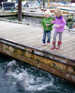 Oak Bay Marina Seals victoria