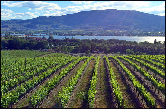 The vineyards at Spirit Ridge resort open up to a vista of Lake Okanagan.  (Michelle Hopkins/Vacay.ca)