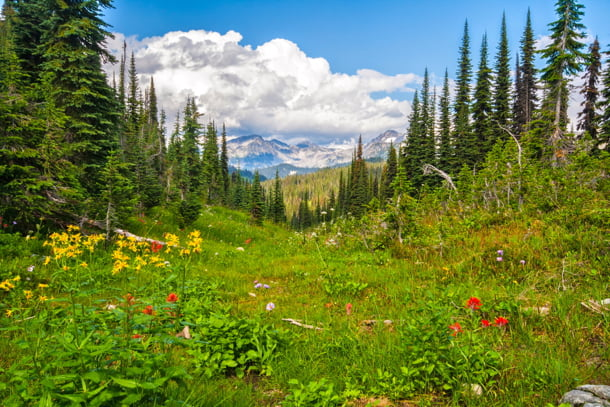 mount-revelstoke-national-park-wildflowers