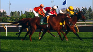 Woodbine_Racetrack_Toronto_Ontario