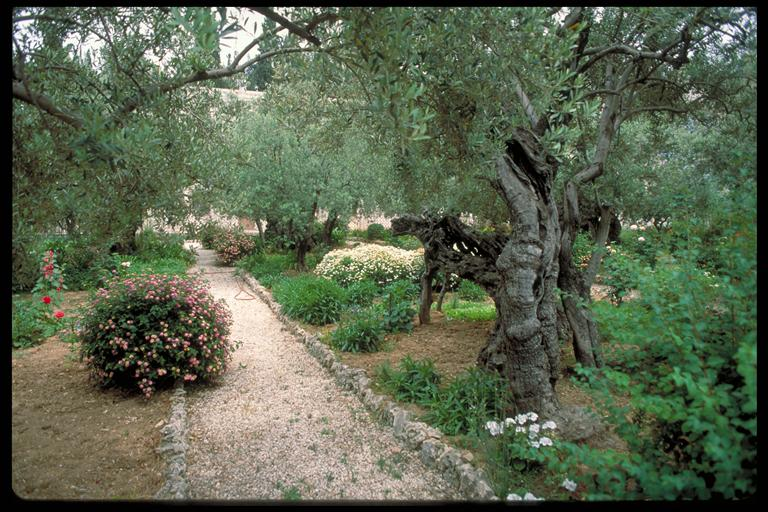 Garden of Gethsemane - no name