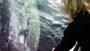 grey-whale-ucluelet