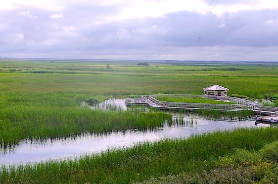 oak-hammock-marsh-wetland-manitoba