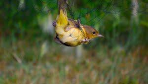 wren-oak-marsh-wetland-manitoba