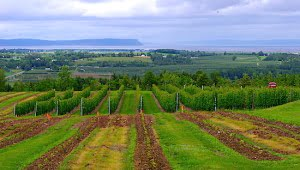 luckett-vineyard-annapolis-valley-nova-scotia