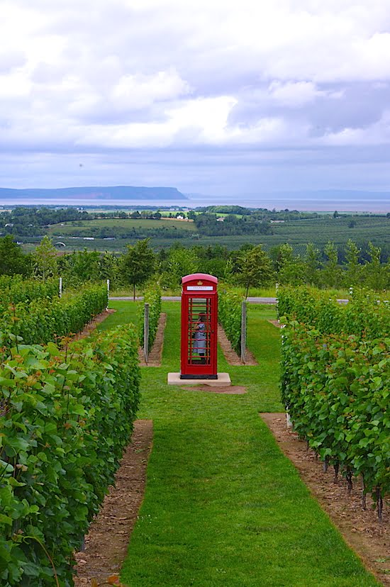 luckett-vineyard-red-phone-booth