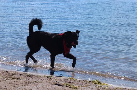 PET Juno_water Feature