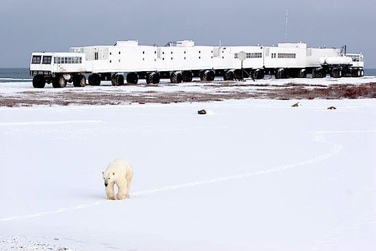 polar-bear-tundra-buggy-lodge-churchill