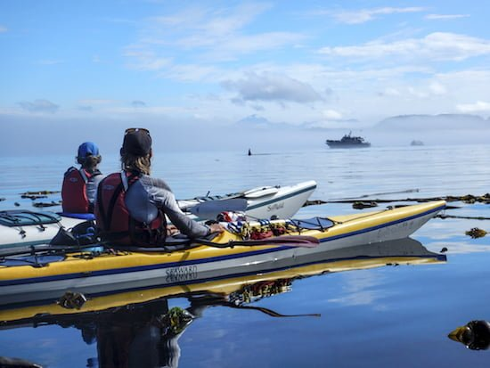 ROW-adventures-kayaking-orca-viewing-british-columbia