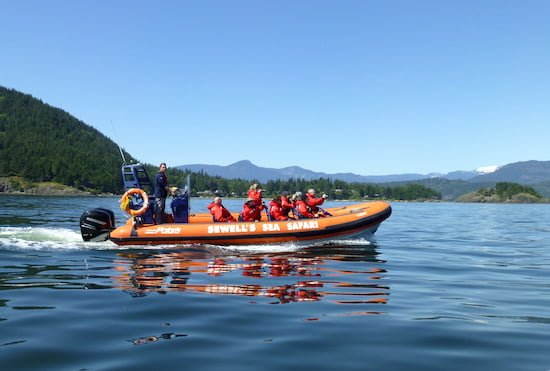 sea-safari-sewells-squamish