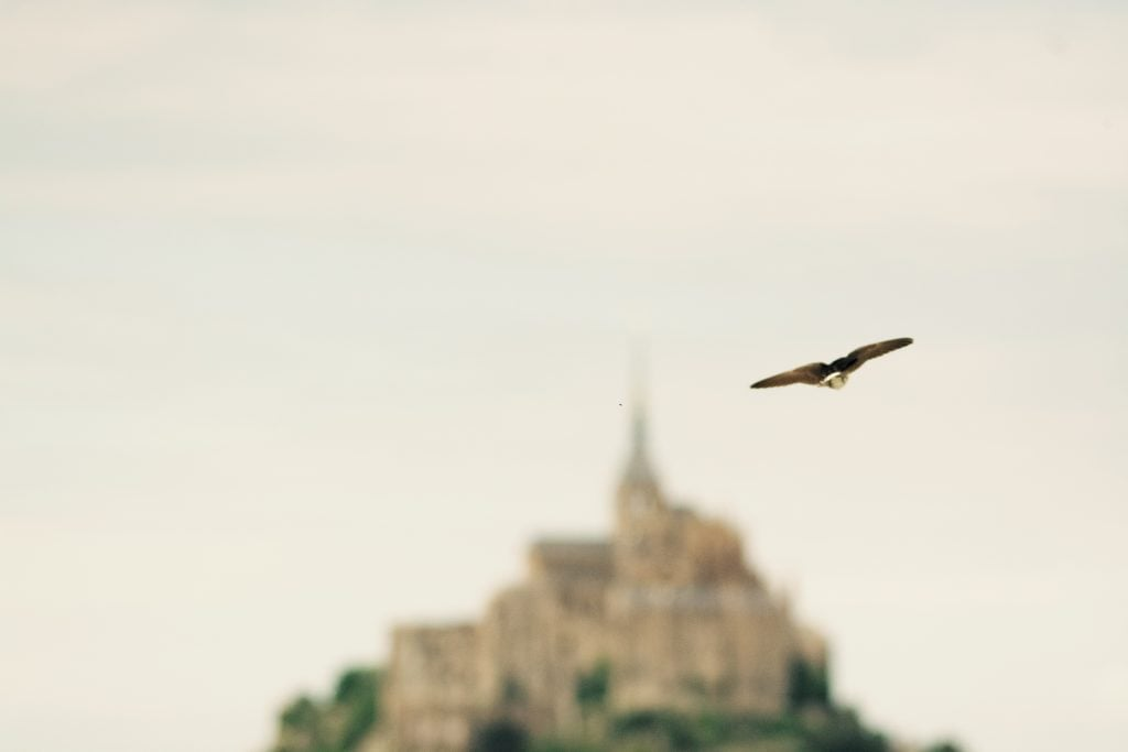 mont-saint-michel-bird