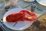 sebastian-lobster-cape-breton