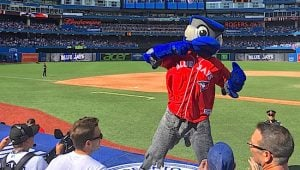 blue-jays-ace-mascot