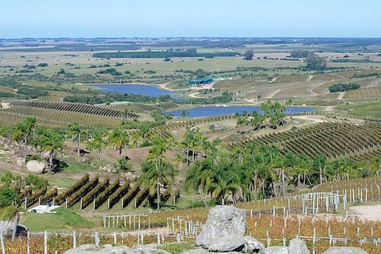 bodega-garzon-uruguay