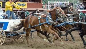 calgary-stampede-kelly-sutherland
