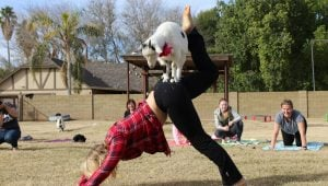 Kate_Instructor Sarah Williams giving a demo at Goat Yoga Class (2)