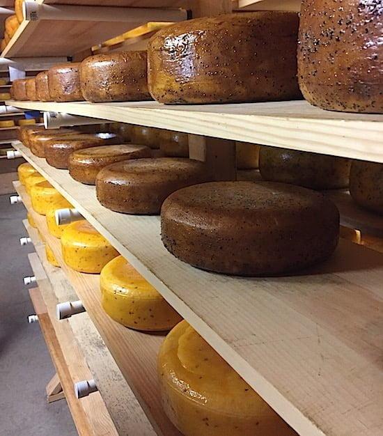 glasgow-glen-farm-cheese-pei