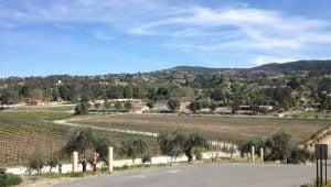 Danza-Del-Sol-Winery-1024x768