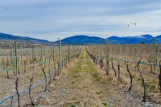 inkameep-vineyards