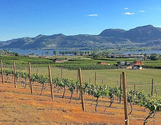 vineyards-overview