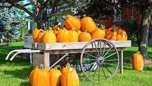 Perth County pumpkins