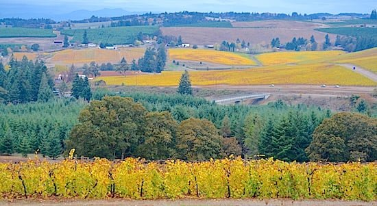 willamette-valley-vineyards-fall-colours