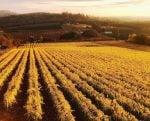 willamette-valley-vineyards-farm-view